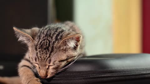 Cute Cat Sleep UNDER MUSIC