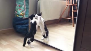 30 second Funny Cat And mirror Video
