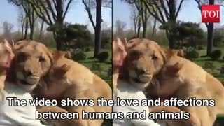 Watch: Lion duo reaction when reunited with their former caretaker, Watch now!
