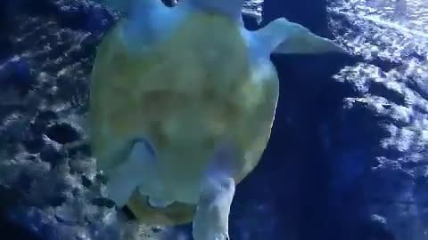 Amazing look at a sea turtle