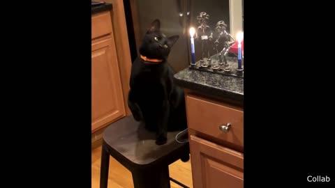 Curious Cat Smacks a Candle