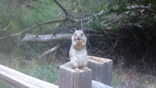 Friendly Squirrel at Zion National park!