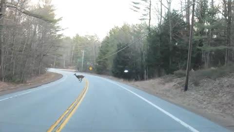 Four Deer crossing the road