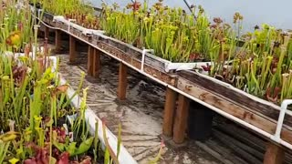 The wonderful world of carnivorous plants