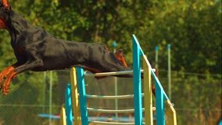 Dogs training video
