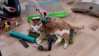 Chill cat doesn't mind getting completely covered with toys