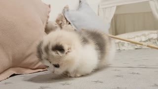 Cute kitten playing video