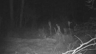 Gigantic Monster PA Buck Following Trail
