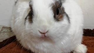 Chuck Bunny...2