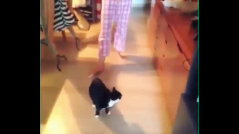Daily cat video - 10