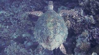 turtle swims in the ocean
