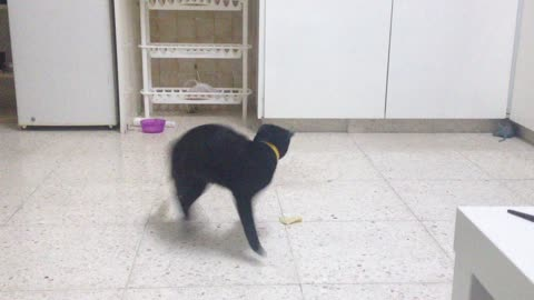 Karate cat goes into action