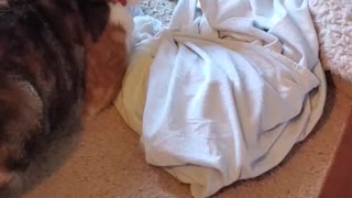 Cat Gets Pranked and Dog Comforts Her