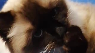 Cute cat taking bath