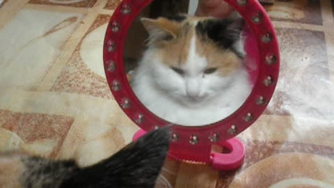 My cat looks at itself in the mirror.