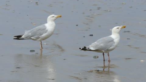 Seagulls Worms Microscope Beach Sand