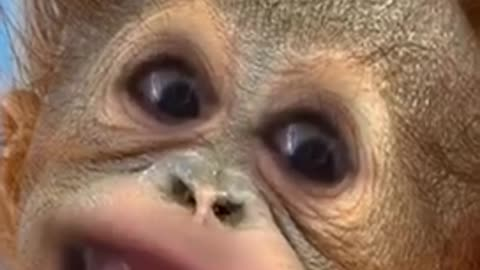 Creepiest monkey video sent to me By my 11 yr old grandson