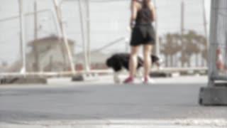 Nice dog dog