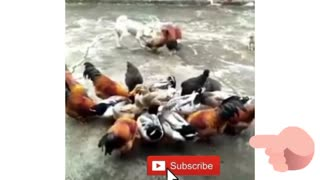 Funny dogs, cats ,and others animals