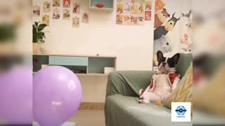 SUPER FUNNY DOG VIDEO