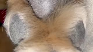 Cute Paw looks like a Dancing Teddy Bear