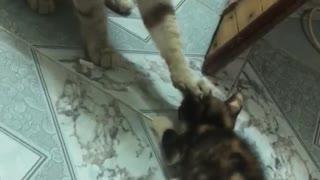Cat Keeps The Kitten Calm