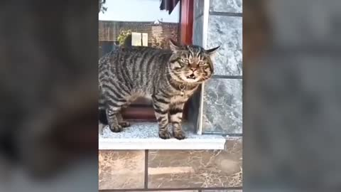 Cats are talking 😱