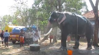 Kollam tourism - Guruvayoor Valiya kesavan, One of the Biggest elephant in Kerala
