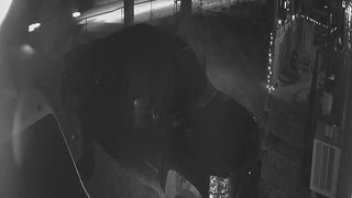 CCTV Catches Driver Hitting Calf and it Lives