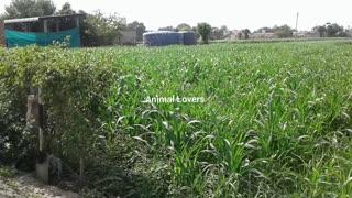 Punjab Village