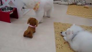 I am very happy about little dog Hana