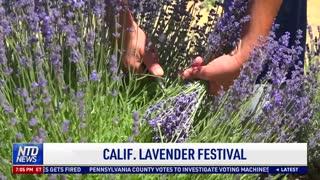 California Lavender Festival