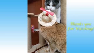 Amazing Animal funny captures