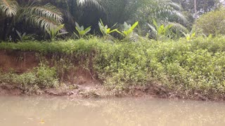 Crocodile hidden in plain sight in Costa Rica