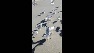 Rachel does not like Seagulls