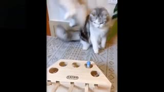 Watch these cats go crazy, really funny stuff