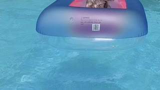 Yorkshire terrier puppy enjoying her pool float