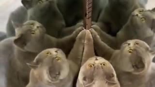 Cat Discovers Optical Illusions