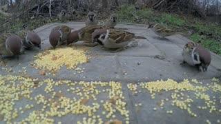 Birds feeding them selves