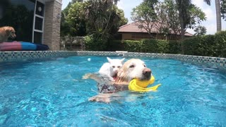Dog and cat swimming together