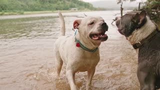 Two Dogs Playing!!