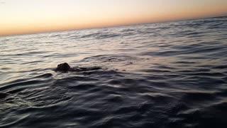 FLOATING   BEACH SERIES