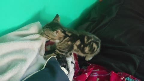 Kitten wanting some love