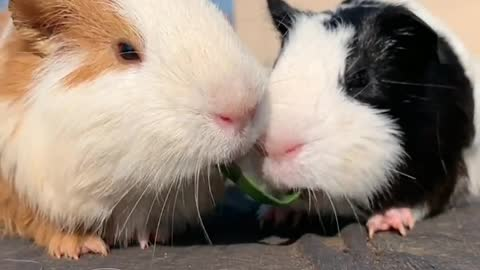 Two cute little animals, perfect love