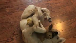 Dog hugging bunny