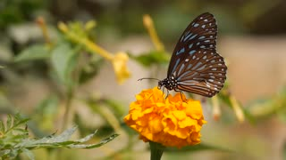Beautiful butterfly caressing nature