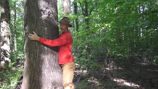 Energy Healing with Trees