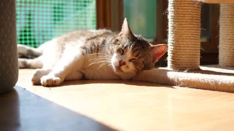 Sleepy cat 😊
