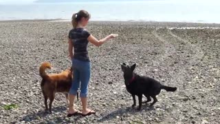 dog training - come here - on command