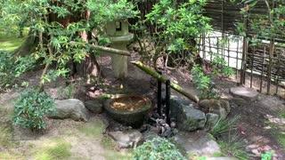 Portland Japanese Gardeb